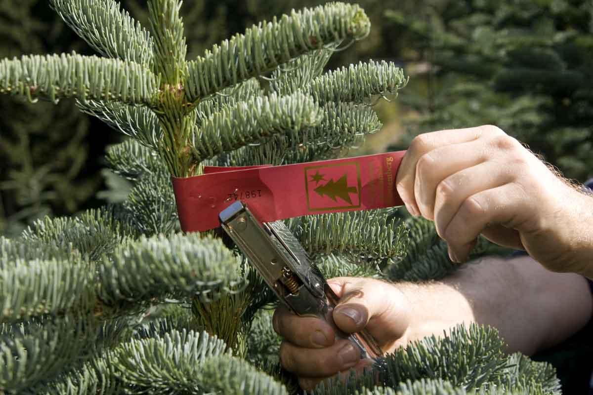 weihnachtsbaumkulturen_03